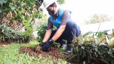 Photo of Peduli Lingkungan, PLN Lakukan Aksi Tanaman Bibit Pohon dan Bersih Gardu Serentak di Jakarta Raya
